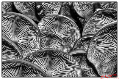 fungi yewbarrow grange-over-sands